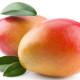 食べられる前に食べろ!台湾産マンゴーの季節再び2015